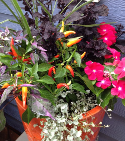 Garden color container combination