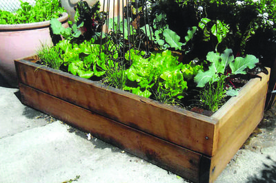 RAISED BED1