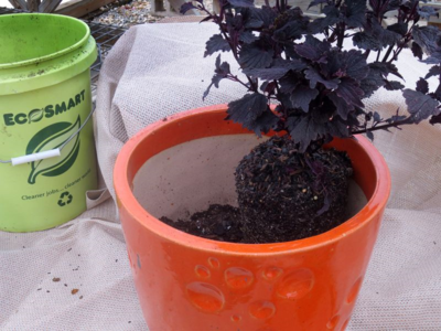 Be sure that the root balls of your plants are level,