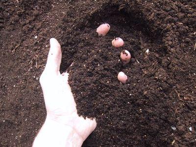 Hand in soil WEB
