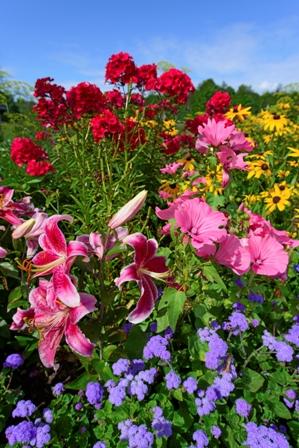 Phlox and Perennial gardenWEB