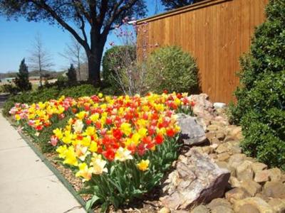 BCC Corner w Tulips WEB